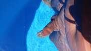 Photos de la bite de Apetissante, fraîcheur d'un bain